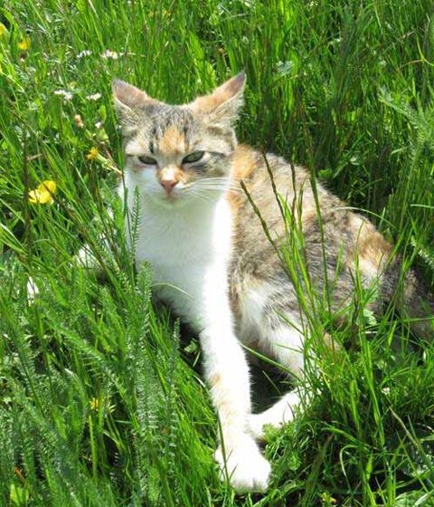 Cats - Ferienhof Henn