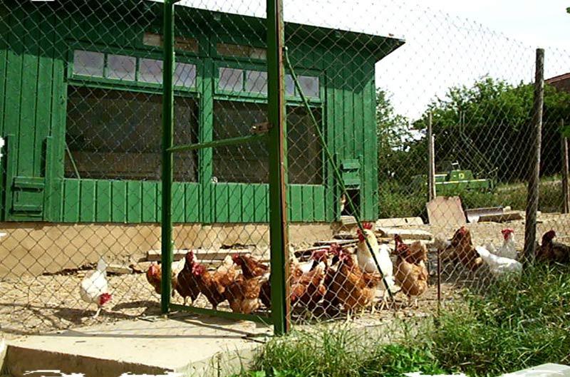 Huehner Ferienhof Henn