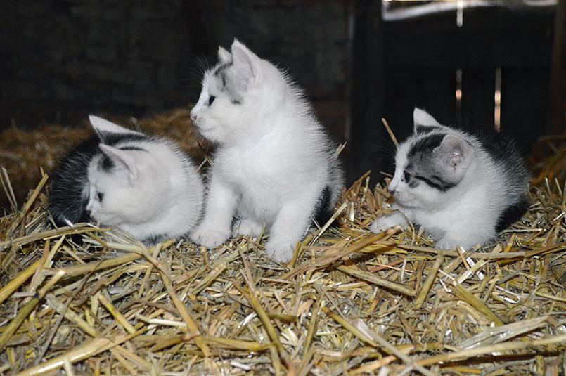 Katzen Ferienhof Henn