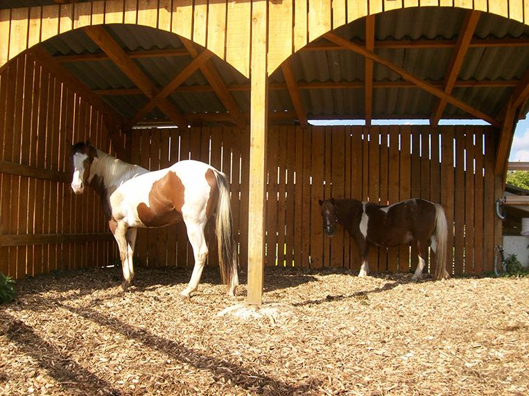 Pferde 2 Ferienhof Henn
